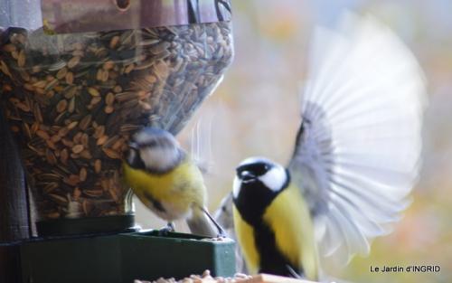 enveloppes,chez Bernadette,oiseaux 046.JPG