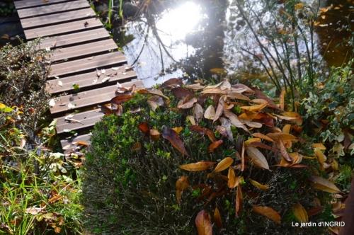 canal,automne,tonte des feuilles 020.JPG