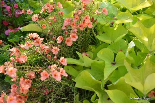jardin,fruits,Caro,papillons,manthe religieuse,Lalinde 084.JPG