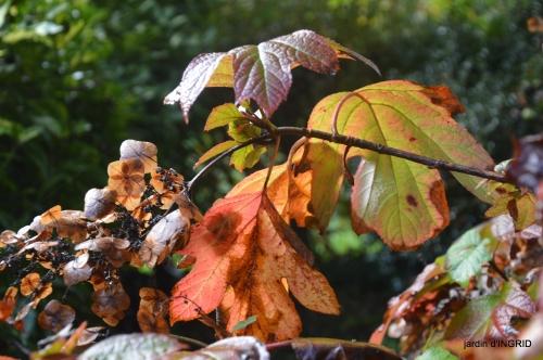 couleurs d'automne,bouquet,lune 099.JPG