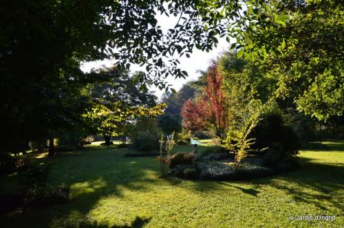 jardin,asters,fleurs blanches,chatte,rosiers roses 073.JPG