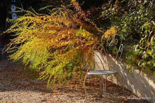 les arbres en automne,cabane 059.JPG