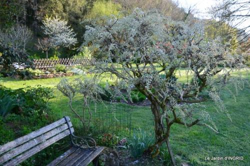 Bergerac, jardin ,arbres fruitiers,printemps 041.JPG