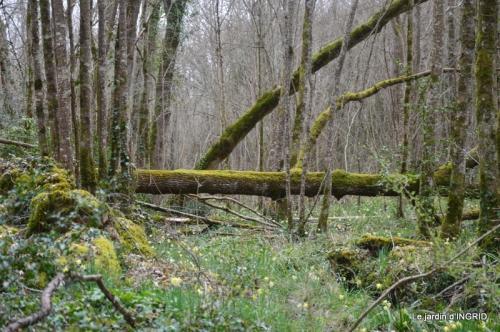 les jonquilles des bois 044.jpg