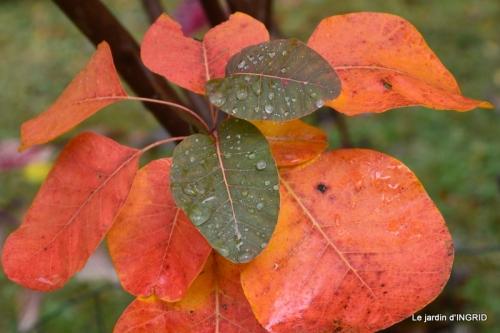 feuillages d'automne et tonte de la pelouse 034.JPG