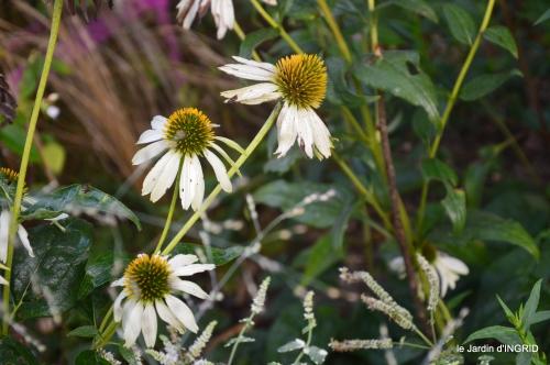 Fleurettes,Dordogne,jardin 130.JPG