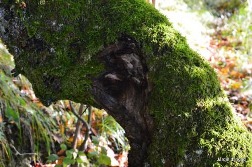 troncs,automne,vieilles photos 059.JPG