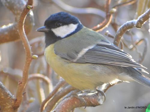 oiseaux ,lutins,buse 010.JPG