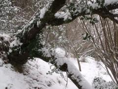 janvier fevrier 2012 078.JPG