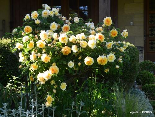 Tour du jardin mai avant et apres tonte 005-001.JPG