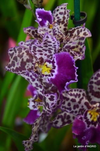 Orchidées,Noel jardiland,lever du soleil 028.JPG