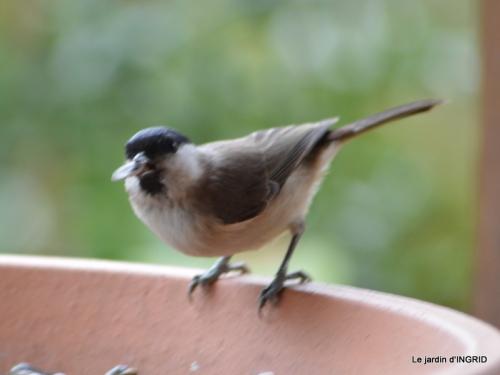 enveloppes,hélébores,oiseaux, 007.JPG