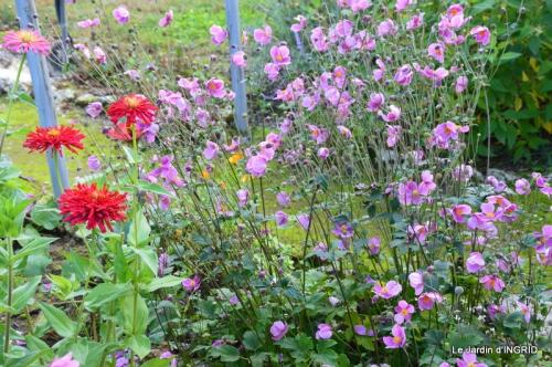 jardin Mme Perichou,grandes fleurs,bouquet,jardin 033.JPG