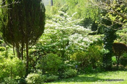 geais,jardin,printemps 094.JPG