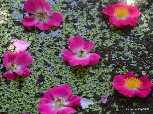 Epouvantails,ouverture,jardin 048.JPG