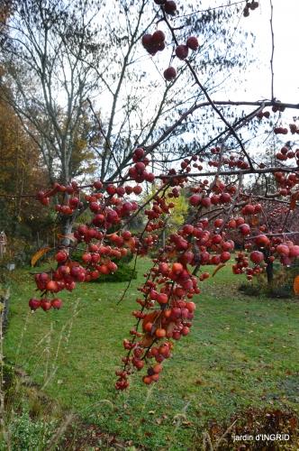 fin de l'automne,Lalinde,bouquet de l'avent 098.JPG