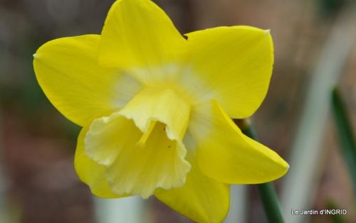 jardin (3 semaine de mars) 032.JPG