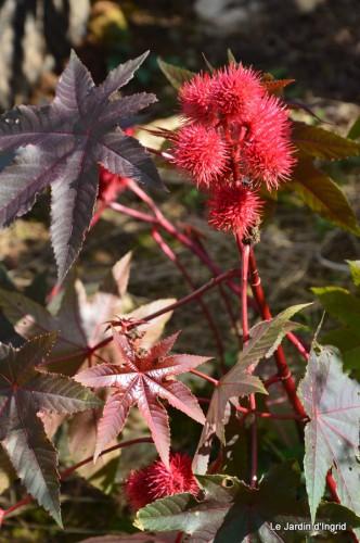 jardin octobre 035.JPG