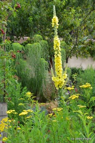 tournesols,pt jardin,nénuphard,libellules,lavande bouquet,carava 040.JPG