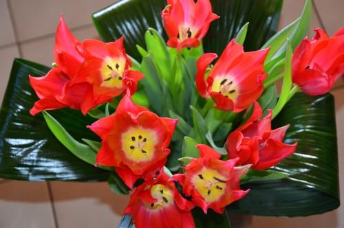 mésanges nonnette,orchidées,jardin,amaryllis 074.JPG