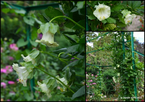 2016-09-13 bouquet,jardin de Monet,les vaches,Pourville sur mer12.jpg