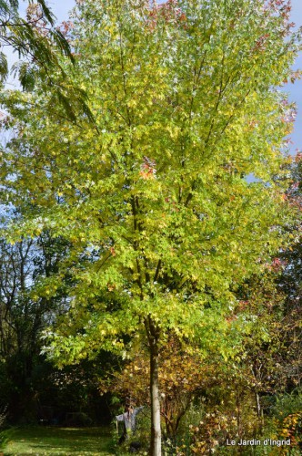 automne,arbres,inondation 090.JPG