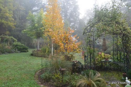 sauges,bouleau,coucher de soleil,érables,automne 111.JPG