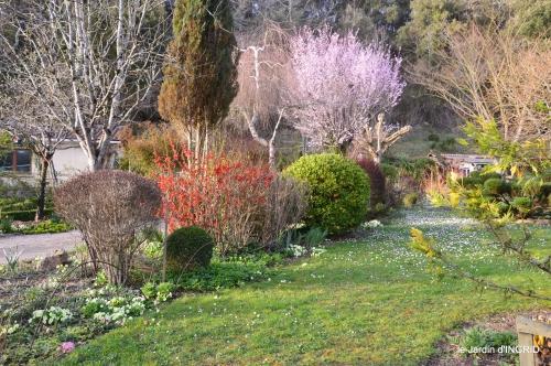 primevères ,jardin 037.JPG