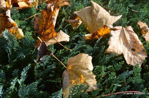 canal,automne,tonte des feuilles 008.JPG