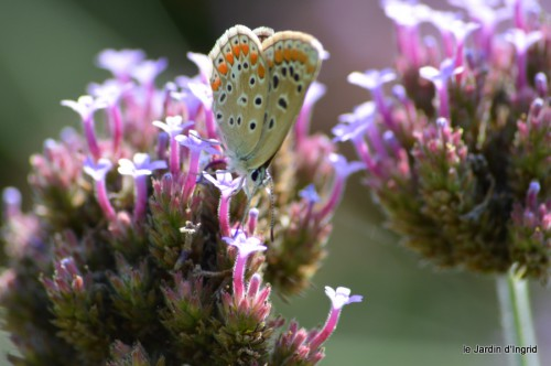jardin,fruits,Caro,papillons,manthe religieuse,Lalinde 126.JPG