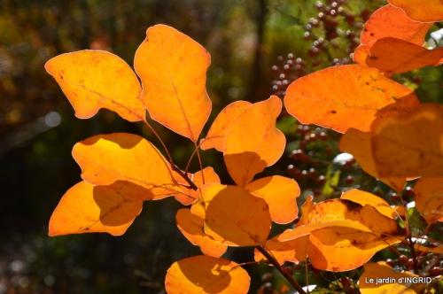 pommier et rosier,automne 051.JPG