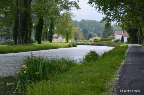 canal,fleurs blanches,marguerites,LE FLEIX,osier 063.JPG