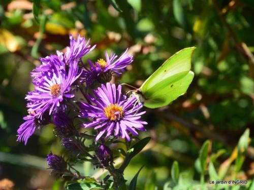 papillons,couleurs d'automne,Bernadette,pluie 056.JPG