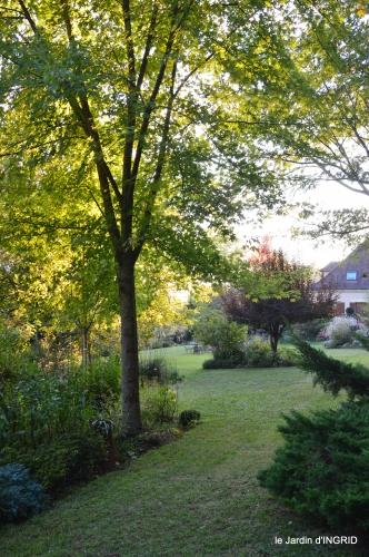 cygnes,jardin,apres la tonte 117.JPG