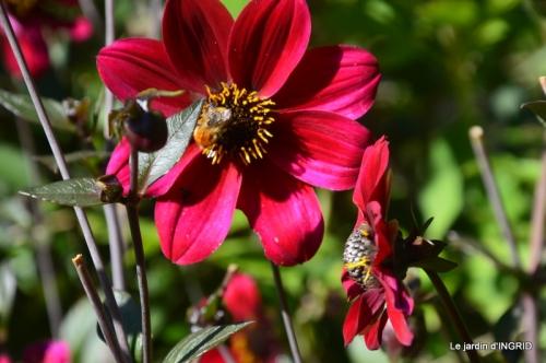 orage,puces,bouquet,Anniv.Ines,Brantome,Jardins d'eau 054.JPG