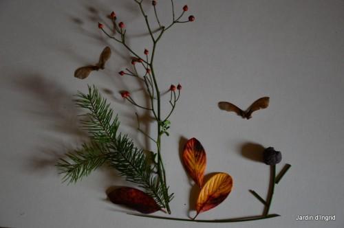 matin d'hiver,tableaux de fleurs janvier 047.JPG