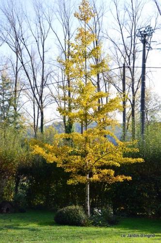 jardin automne,Arya avec Nicky 092.JPG