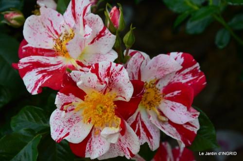 Cadouin,ancolies,roses,pollen,osier,photos Fabien,coquelicots 026.JPG