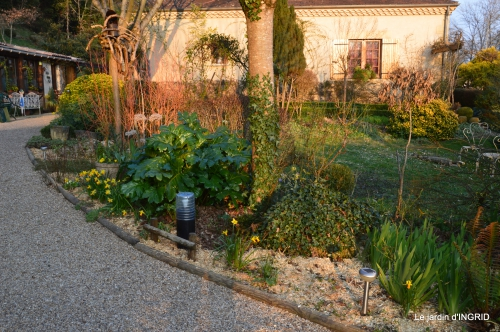paillage,primevères,jonquilles,jardin 079.JPG
