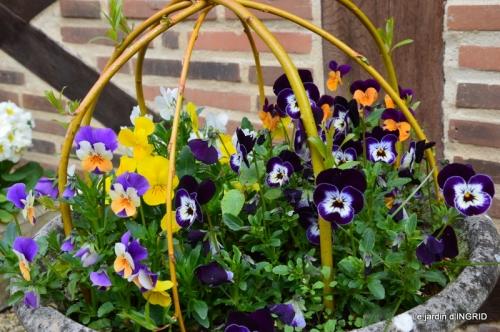 jardin ,cane sauvage,paquerettes,tulipes 102.JPG