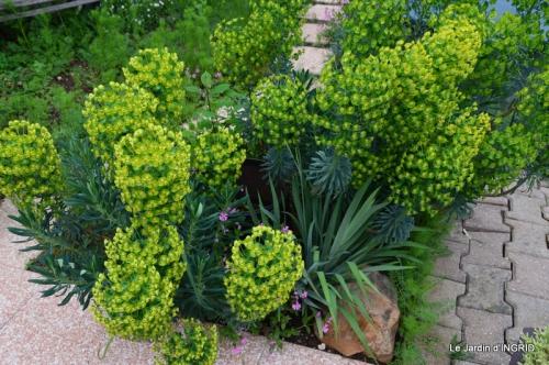 jardin avril 081.JPG