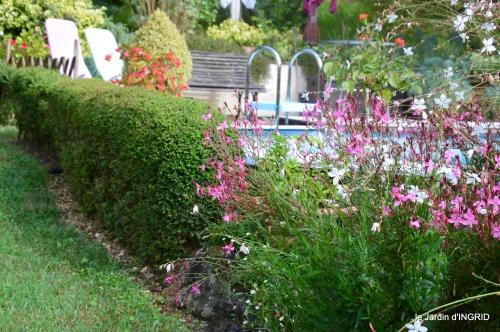 Tuillières,stenbergias,Jaune,jardin,chassis 215.JPG