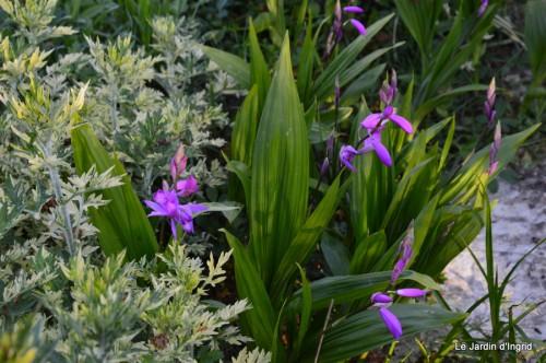 Ciron,pivoine,escargot,jardin,ancolie,glycine 206.JPG