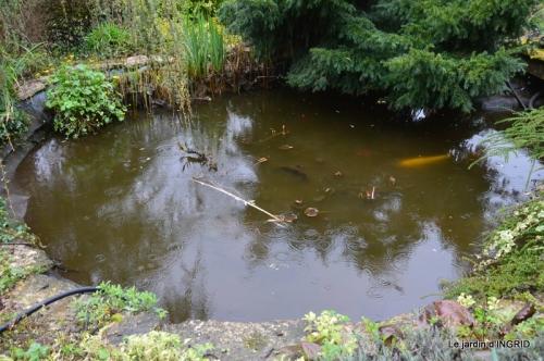 semis,bassin,tour du jardin 042.JPG