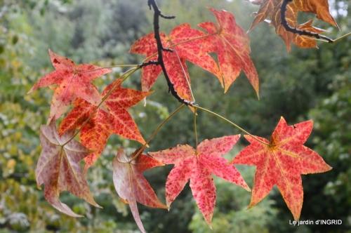 papillons,couleurs d'automne,Bernadette,pluie 120.JPG