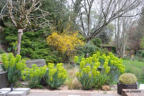 tulipes,Julie,golf,jardin 038.JPG