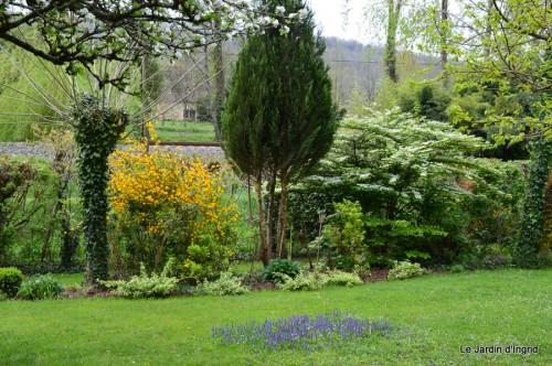 tillandsia,rainette,terreau,jardin 015.JPG