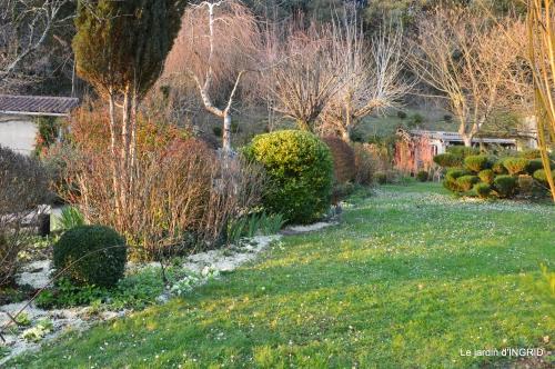 paillage,primevères,jonquilles,jardin 085.JPG