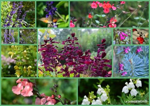 2015-09-02 l'orage,dahlias,copines,jardin,sauges.jpg