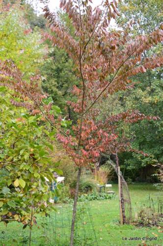 automne,arbres,inondation 009.JPG